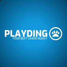 play-dingo-logo
